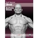 ZBrush Anatomia